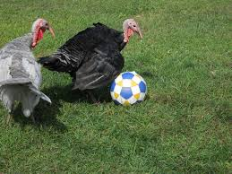 thanksgiving lancaster pa work off the thanksgiving pounds pick up soccer at lams friday
