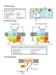 stress pattern sperm adalah reactive oxygen species wikipedia