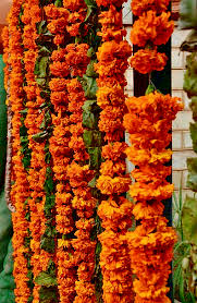 Flower Garland For Indian Wedding Flowers Plants Wreath Decoration Beautification Garland