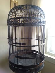 best 25 bird cages for sale ideas on cage code bird