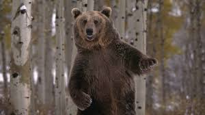 1920x1200 px free desktop pictures bear by coy blare for