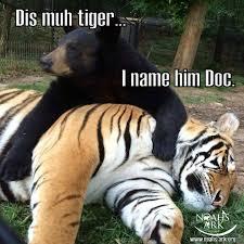Tiger Meme - dis muh tiger i name him doc bear tiger meme monday lol