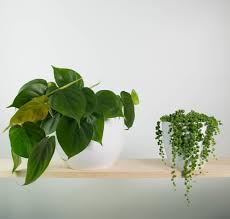 urban jungle bundle plantandpot nz