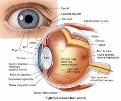 Eye Ducts Anatomy Human Anatomy Diagram Science Anatomy Of The Human Eye Anatomy