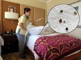 How To Get Rid Of Bed Bugs At Home Bed Bug Bites Get Rid Of Bed Bugs Pictures Treatment