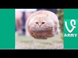 I Believe I Can Fly Meme - i believe i can fly funniest vines compilation hd part 29 youtube