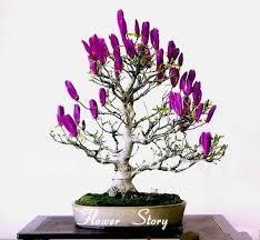aliexpress buy garden pots planters magnolia flower seeds