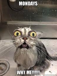 Why Me Meme - mondays why me cat bath make a meme
