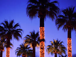 interesting decoration palm tree christmas lights trees it s