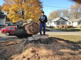 dump that stump llc project gallery