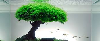 Aquascaping With Driftwood The Top 5 Best Aquascaping Plants Aquarium Info