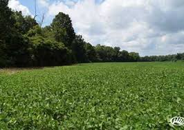 West Tennessee Auction Barn Land For Sale In West Tennessee Page 1 Of 123 Lands Of America