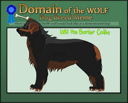 Border Collie Meme - dotw loki the border collie by faiienshadows on deviantart