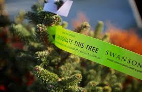 living christmas trees u2014 pick the perfect christmas tree at
