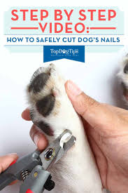how to cut dog u0027s nails 101 a step by step video guide