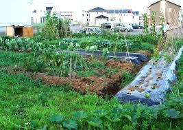 building a vegetable garden restaurant the garden inspirations
