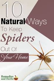 How To Keep Spiders Out Of Your Bed Top 10 Natural Ways To Keep Spiders Out Of Your Home Diy Home