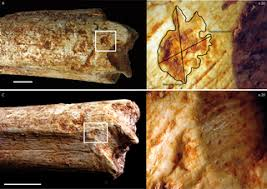 resultat cap cuisine 2012 pleistocene hominins as a resource for carnivores a c 500 000 year