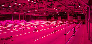 horticultural led grow lights philips and colorado state university seal led grow light research