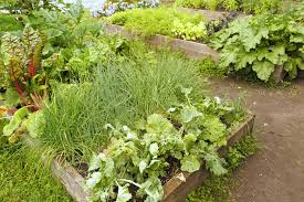 pictures of a garden the rules of raised beds you bet your garden whyy