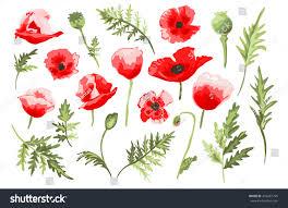 elegant decorative vector poppy flowers leaves stock vector