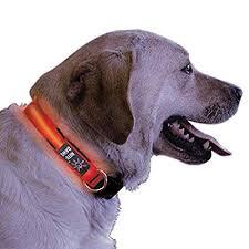 light up collar amazon amazon com nite ize nite dawg light up dog collar red led red