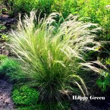 decor ornamental grasses for outdoor decorating