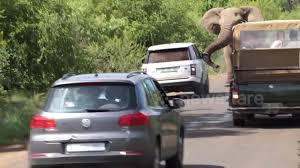 volkswagen safari angry bull elephant charges at safari vehicles aol uk travel