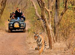 wildlife tours images Wildlife tour packages india safari national parks resorts india jpg
