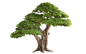 tree png transparent images png all