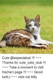 Good Luck Cat Meme - 25 best memes about good luck cat good luck cat memes