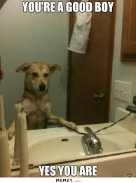 Looking In The Mirror Meme - a dog looking in the mirror memey com