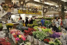 Wholesale Flowers Field To Vase Floral Design Flower Duet U0027s Community Services