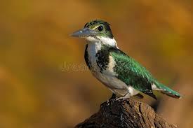si e habitat uccello verde e bianco che si siede sul ramo uccello nell habitat