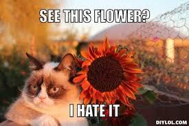 Grumpy Cat Meme Generator - cat meme generator