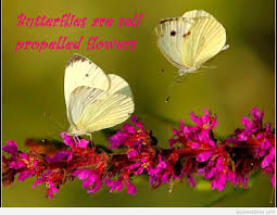 amazing flowers quotes with pics and wallpapers