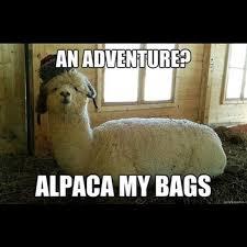 Alpaca Sheep Meme - silly animal memes popsugar pets photo 12