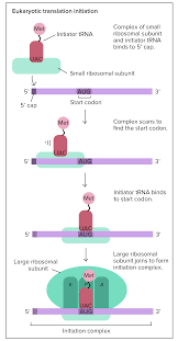 translation mrna to protein video khan academy