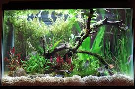 Aquascaping With Driftwood 20 Gallon Aquascape Updated Pics 146579