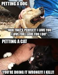 Mean Cat Memes - cats are mean