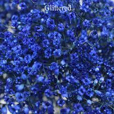 Baby S Breath Flower Blue Enhanced Baby U0027s Breath