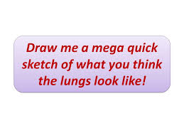 respiratory system u2013 the lungs ppt video online download