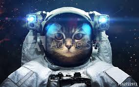 cat universe wallpaper science fiction space wallpaper with cat astronaut incredibly