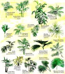 grow tropical palms at home organic gardening palm chart and