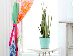 snake plant our best tips for caring for sansevieria apartment