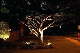 Landscape Lighting Trees Tree Straps For Landscape Lighting Landscape Tree Lighting