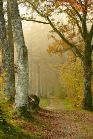 2971 best forest for the trees images on pinterest nature track in a misty autumn forest pays de la loire france by anne