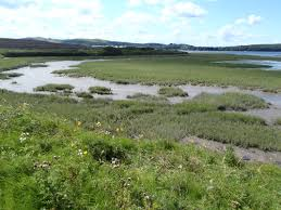 plants native to ireland saltmarsh angiosperm assessment tool for ireland smaatie bec