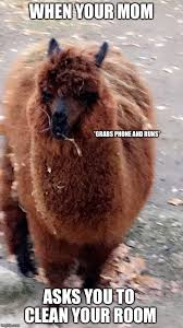 Alpaca Memes - when your mom asks you to clean imgflip