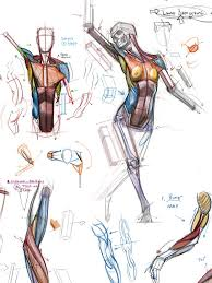 Human Anatomy Muscle 751 Best Anatomy Human Body References Images On Pinterest